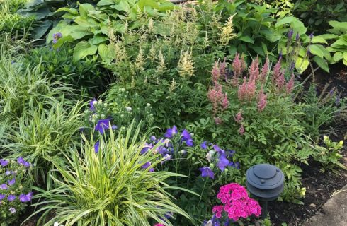 A garden bed full of an assortment of green plants and yellow, pink and purple flowers