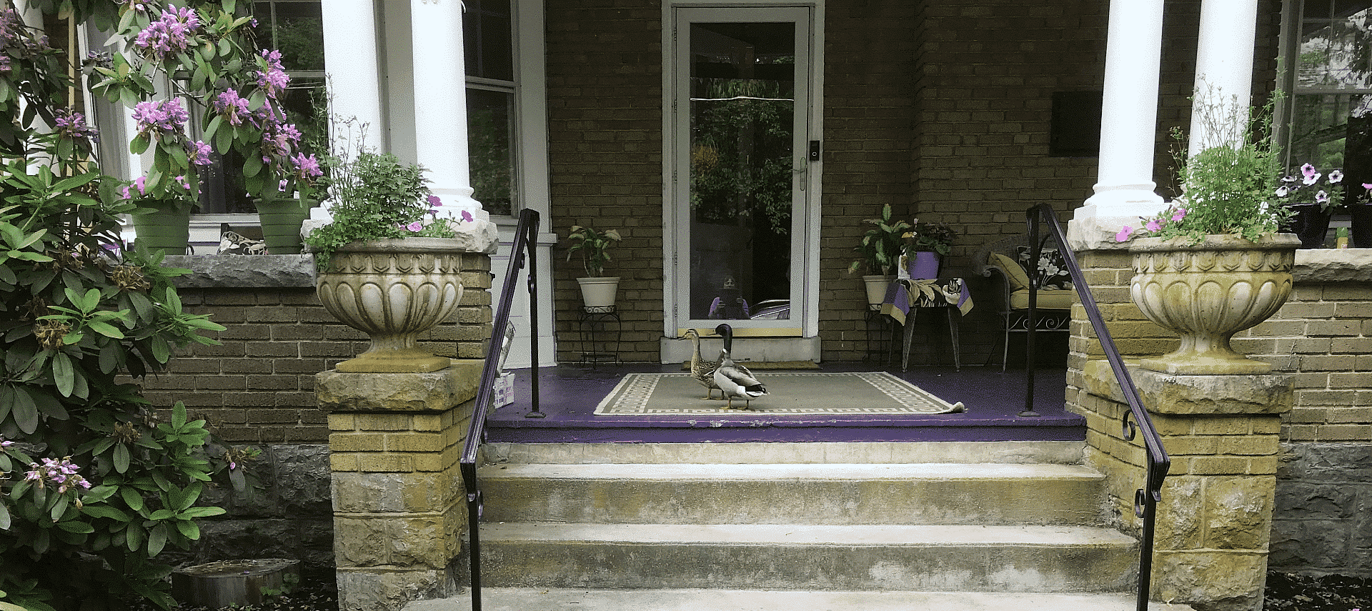 Front porch of a home surrounded by flowering bushes, potted plants with two ducks standing by the doorway