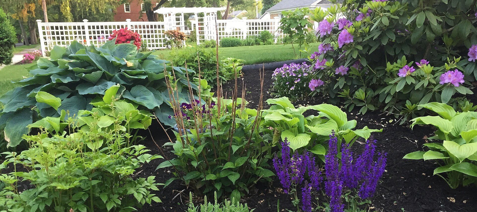 Garden bed full of lush green plants and purple and red flowers with white fence in background